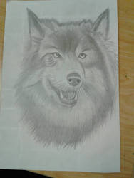 Wolf drawing by LuigiHorror64