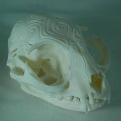 Cat skull 1 by grygon