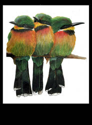 european beeeaters by poseidonsimons