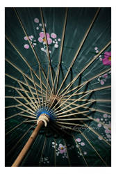 Orchid Parasol by kedralynn