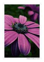 Summertime Flowers 1 by kedralynn