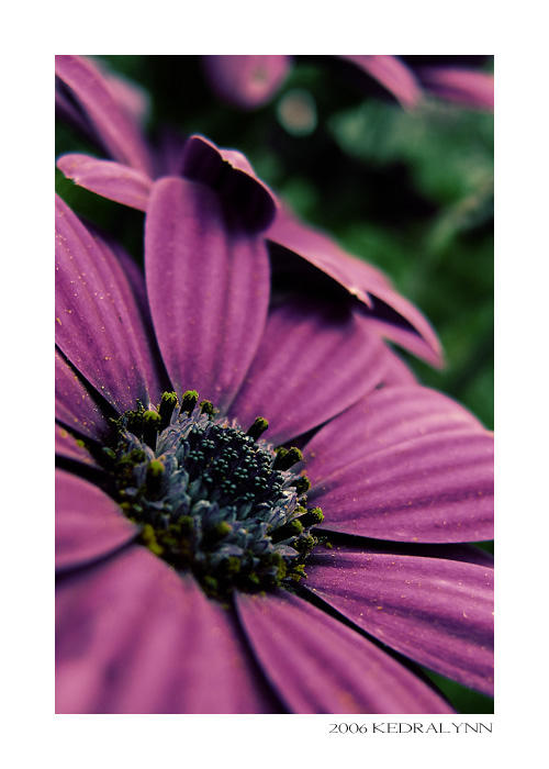 Summertime Flowers 2 by kedralynn