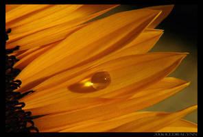 Sun Drop by kedralynn