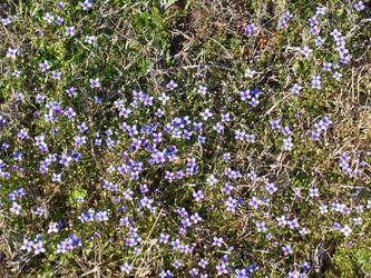 Early Spring Flowers by heavyoak