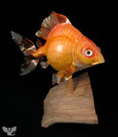 Gourd Fish #6 - Large Goldfish by ART-fromthe-HEART