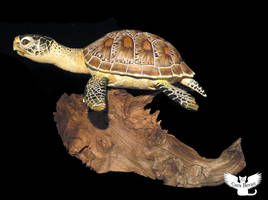 Another Gourd Sea Turtle by ART-fromthe-HEART