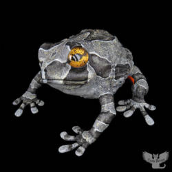 Gourd Frog #157 - Southern Grey Treefrog by ART-fromthe-HEART