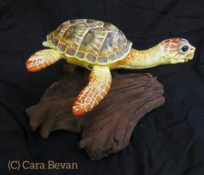 Lena the Loggerhead Sea Turtle by ART-fromthe-HEART