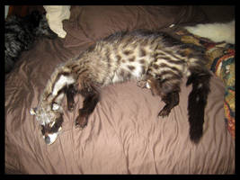 Civet Plush?? by Krissyfawx