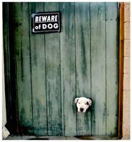 Beware of Dog by Some-Punk-Next-Door