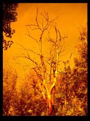 Orange Tree by shelleyinez