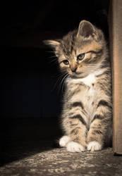 Kitten in the sun by Laazeri