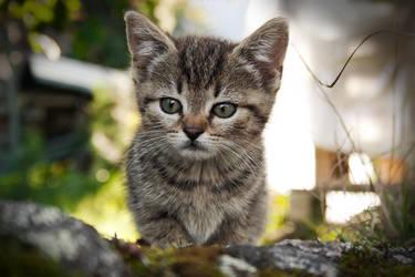 Curious Cat by Laazeri