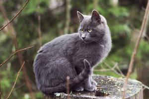 Cat by Laazeri