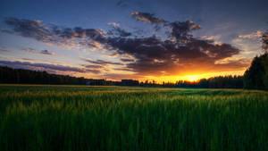 Summer evening by Laazeri