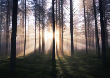 Morning Light by Laazeri