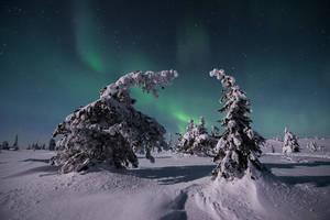 Auroras and Moonlight by Laazeri