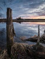 Stump by Laazeri