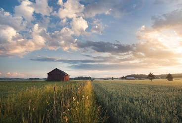 Between the Fields by Laazeri