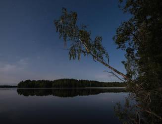 Moonlit Birch by Laazeri