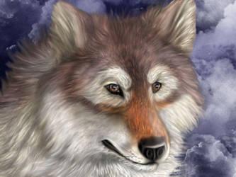 A Wolf by acidreins