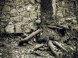 Root by LordAras