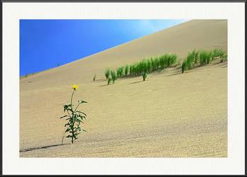 Desert Flower by yenom