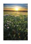 Land of Spring by yenom