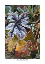 Autumn Frost by yenom