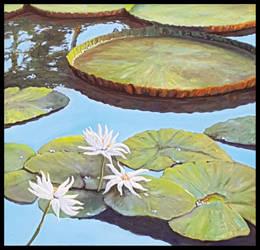 Water lilies by RHanuschek