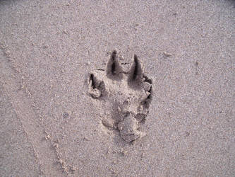 Dog foot in the sand by Tamyte