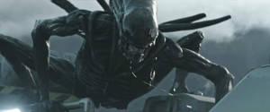 Alien Covenant-Xenomorph by GiuseppeDiRosso