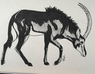 Inktober day 15 - Giant sable antelope by DRGNFL