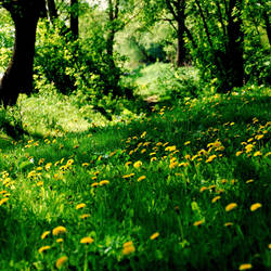 Golden meadow by penguin91