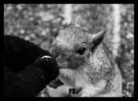 Hyde Park squirrel by DanielNorkFFM