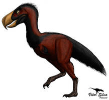 Paraphysornis by Vitor-Silva