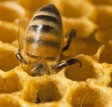 What is Manuka honey by nitupoole