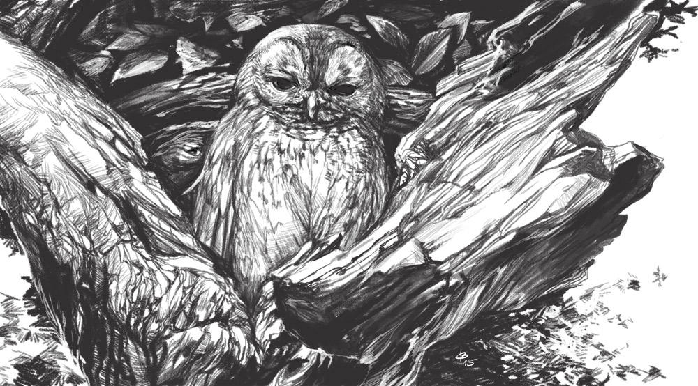 Owl and a tree by engelszorn