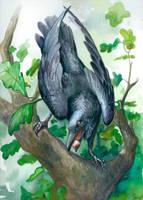 Corvus Corax by engelszorn
