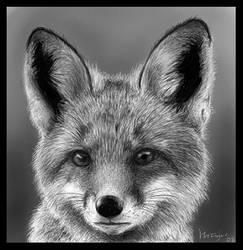 fox by hollietree