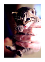 Mary Kitten by maryfaery