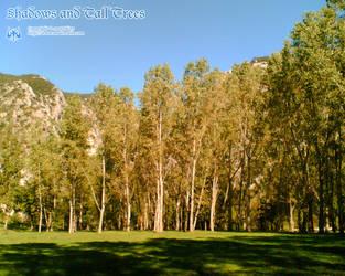 + Shadows and Tall Trees + by skizo
