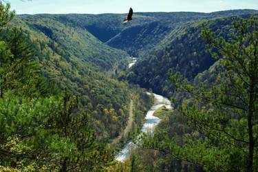 Pine Creek Gorge by crestmultimeadia
