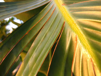 Palm Fronds by imbored359