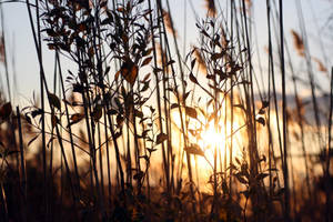cold grass at the bay by sunflowersutra