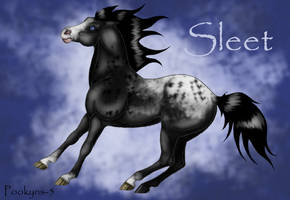 Sleet by pookyhorse
