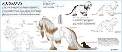 Muskuus horse species by pookyhorse