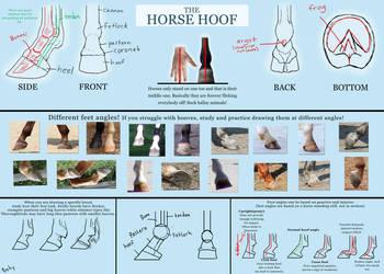 Basic horse hoof tutorial by pookyhorse