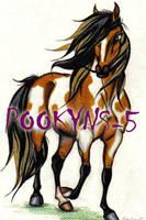 buckskin paint mare by pookyhorse