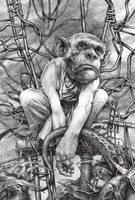 monkey in the middle by DanielGrzeszkiewicz